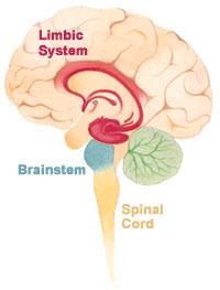brain fitness gym