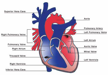 How to improve your cardiovascular health without dangerous statins